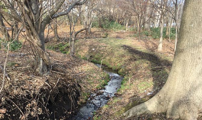 縄文の森散策路