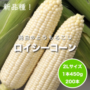 kiku800