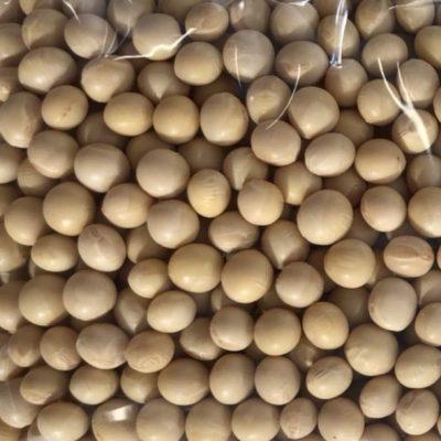 ユキホマレ大豆